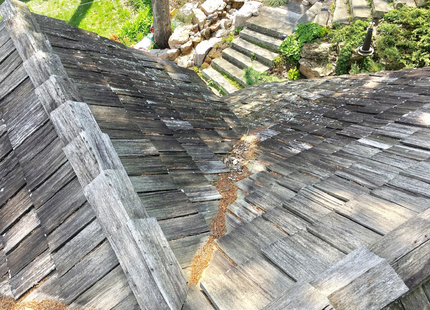 Faq S About Algae Growth On Your Roof Lindus Construction