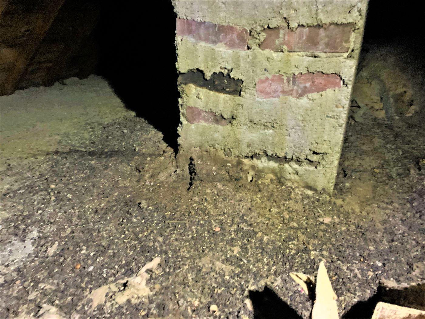 bat droppings in attic